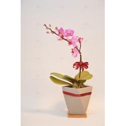 1 mini orchid