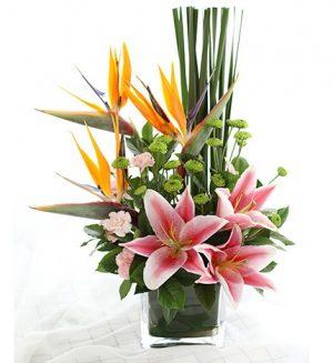 芳菲 枱花