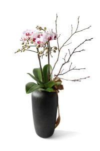 送蘭花? 香港送花專門店捐出10%的利潤給慈善機構。 我們的花店提供蘭花、蝴蝶蘭、拖鞋蘭、萬代蘭。