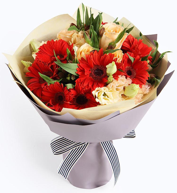 18枝紅色太陽花圖片