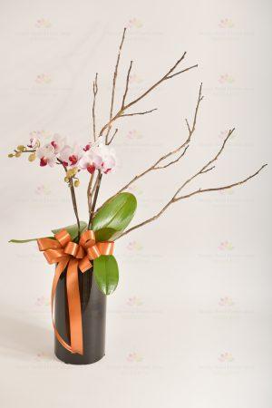 2支迷你蘭花,苔木或線條枝材