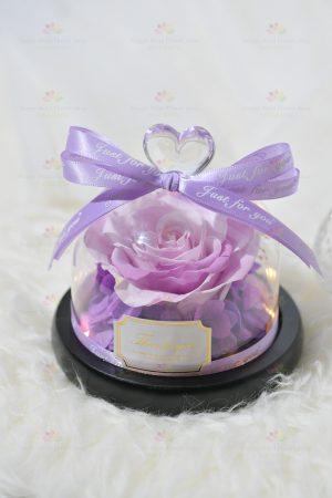 一心一意永生花玫瑰擺設(淺紫帶燈)(2021情人節花束系列)